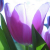 the embellished existence
