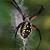 Spiderinnet1